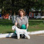 купить щенка цвергшнауцера в Минскее - питомник Солар Джой