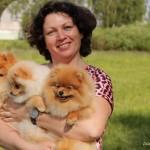 Купить щенка цвергшнауцера и шпица в питомнике в Минске