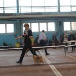 вязка шпица в Минске