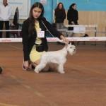 щенки белого цвергшнауцера в Минске купить