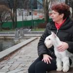 белый цвергшнауцер в Минске
