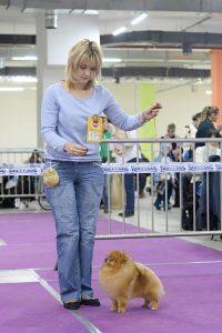щенки шпица в Минске