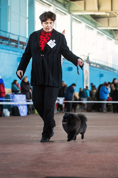 щенки шпица в Минске купить